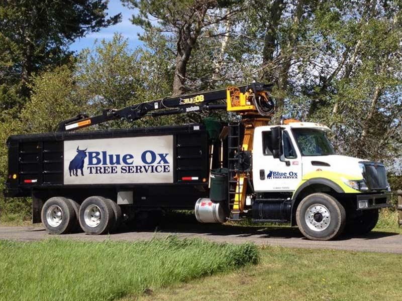 Blue Ox Tree Service