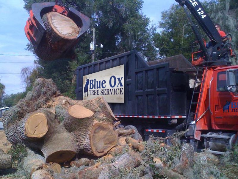 Blue Ox Tree Removal