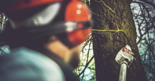 tree-care-services-in-clearwater