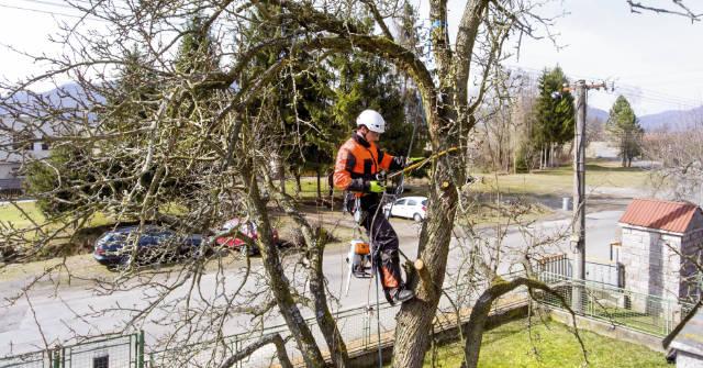 tree-pruning-in-pinellas