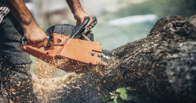 when-tree-removal-clearwater